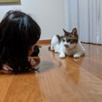 パパスキーヤーの飼育日記「3姉妹のお兄ちゃんネコあずきさんの日常」