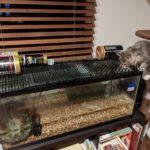 パパスキーヤーの飼育日記「水槽に乗るの禁止」